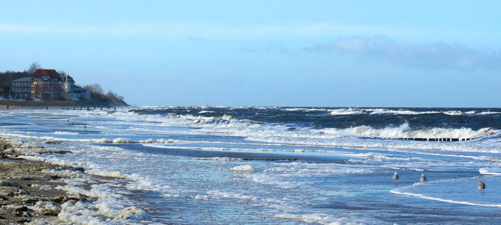 Möwen am Strand von Kühlungsborn